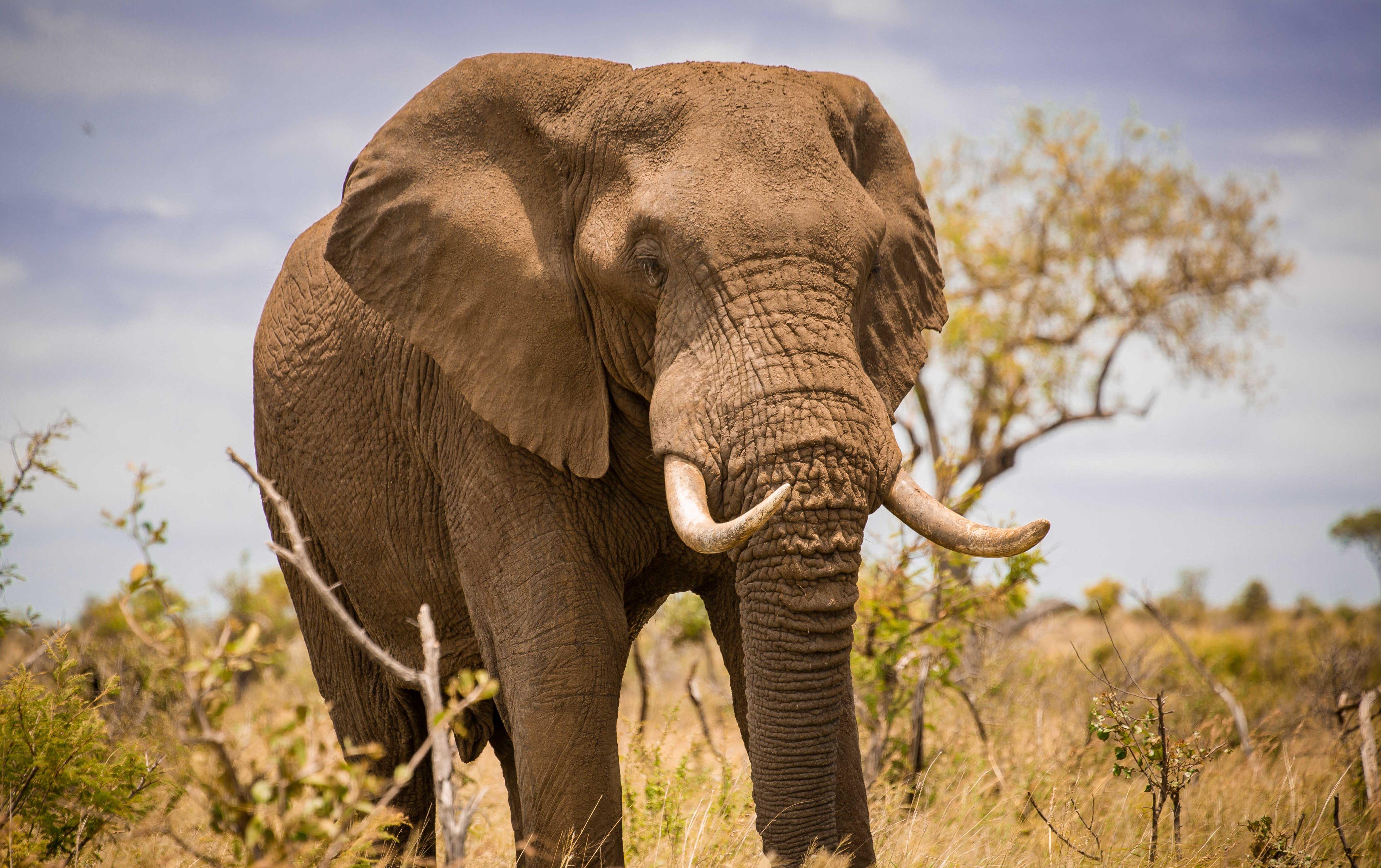 6577d515d7d01d Elephant Conservation and Ivory Sales