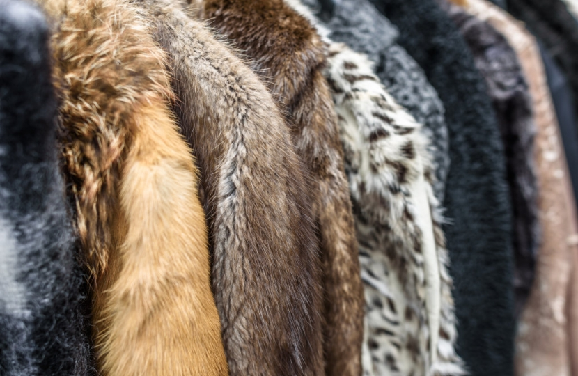 Fur Trade Debate | Huw Merriman
